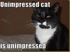 unimpressedcat