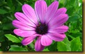 purple_flower_1280x800