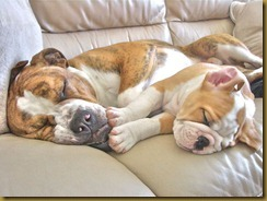 Zonked like these puppies!!!